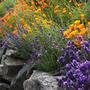 19 лучших растений для цветочной стенки