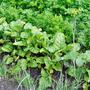 Что с чем растёт? Совместимость растений на грядке